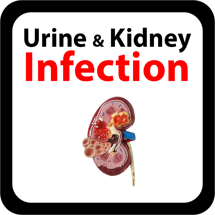 Urine and Kidney Infection